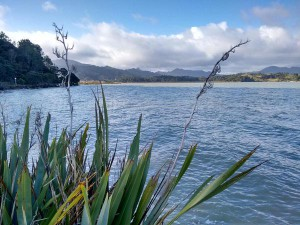 coromandel winter tide
