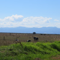 On the road to the Coromandel Peninsular