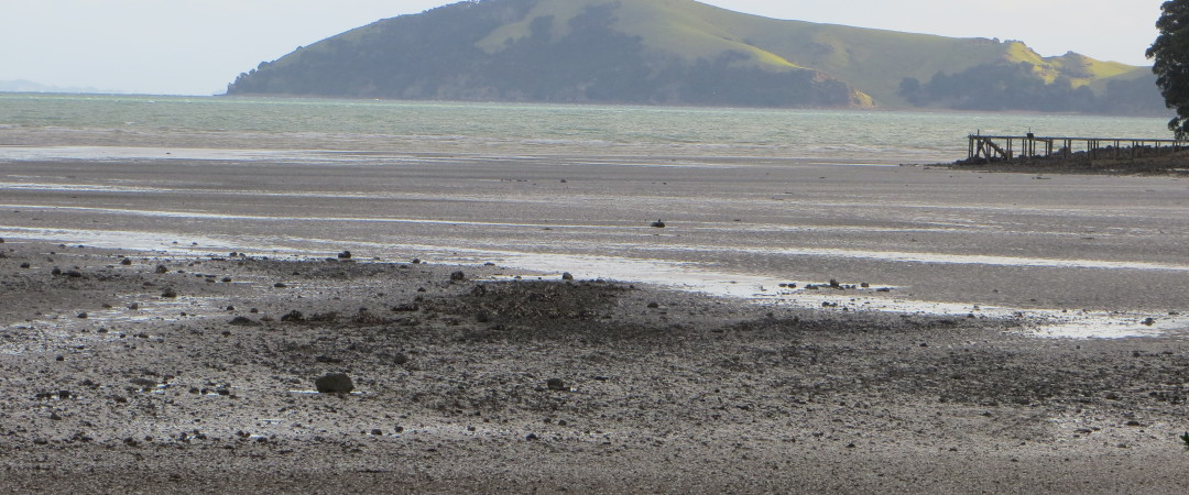 winter on the coromandel beach
