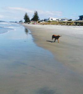 beachdog01
